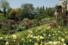 Rose Garden - Huntington Botanical Gardens and Library, San Marino, California (right next door to Pasadena)
