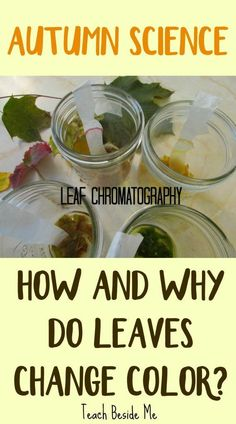 Autumn Nature Learning- Why Leaves Change Color - Leaf Chromatography- Autumn Science Autumn Activities For Kids, Fall Preschool, Nature Activities, Kindergarten Science, Kids Learning Activities, Teaching Science, Stem Activities, Stem Teaching, Preschool Centers