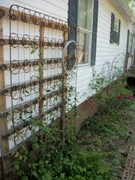 An old box spring re-purposed as a trellis!