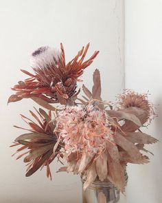 Dusty soft colors of the protea