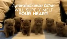 Synchronized curious kittens will surely melt your heart! <3