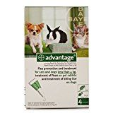 Bayer Advantage 40 (Green) Spot On for Small Dogs, Cats or Rabbits (3-10 Lbs) 4 Month Supply