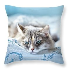 Cat Throw Pillow featuring the photograph Relaxing Gray Cat by Oksana Ariskina on @pixels and @fineartamerica. Sad kitten lie and sleep on blue duvet cover.  Buy print and other product with my fine art photography online: www.oksana-ariskina.pixels.com #OksanaAriskina