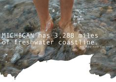 Michigan has the longest freshwater coastline of any state.