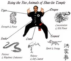 Kung Fu Animal Styles - Learn more about New Life Kung Fu at newlifekungfu.com