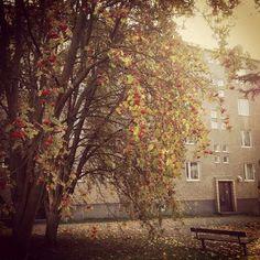 Fall in the city of Tampere, Finland.photographer Karoliina Karjalainen