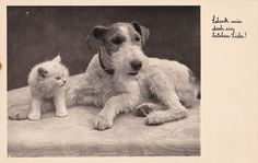 A lovely vintage postcard featuring a Wire Fox Terrier and a kitten, dating from 1954. Can anyone provide a translation of the text?
