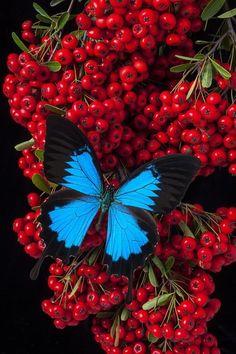 ✿⊱❥ Butterfly