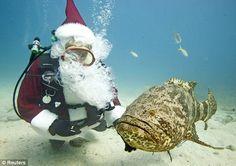 Florida Keys National Marine Sanctuary | in the Florida Keys National Marine Sanctuary off Key Largo, Florida ...