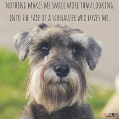 Make one special photo charms for your pets, 100% compatible with your Pandora bracelets. A Miniature Schnauzer thruth