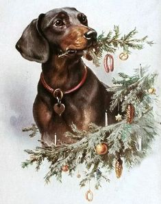 1909 Dachshund Christmas antique postcard printed in germany Vintage Dachshund, Dachshund Art, Dachshund Gifts, Daschund, Merry Christmas To All, Vintage Christmas Cards, Christmas Dog, Postcard Printing, Weenie Dogs