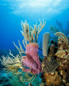 roatan coral reef | Roatan Coral reef scene | Flickr - Photo Sharing!