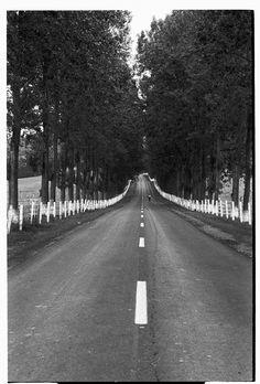 Vintileasca, Vrancea, shot on film. Film Vs Digital, Travel Photography, Country Roads