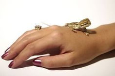 How to Tame Baby Bearded Dragons thumbnail