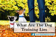 What Are The Dog Training Lies: Exposing The Truth? – My Puppy Story