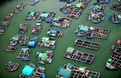 Floating market, Hong Kong - Jason Hawkes