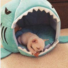 Frenchie House Shark (Washable)