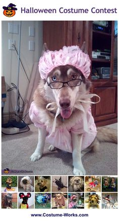 Homemade Costumes for Pets - this website has tons of DIY costume ideas!