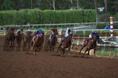 Judy the Beauty (black cap) came from behind around the turn to win the Breeders' Cup Filly & Mare Sprint (G. I) on November 2014 at Santa Anita. Derby Horse, Photo Store, Horse Photos, Horses, Classic, November, Santa, Cap, Animals