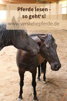 Pferde lesen, Körpersprache, Pferde verstehen