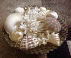 Seashell Pedestal Sink : 1937 seashell collection collection 2015 seashells forward seashell ...