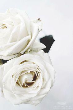 White roses.  For similar pins please follow me at - https://www.pinterest.com/pin/539165386621385355/