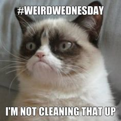 #WeirdWednesday This hack is not really weird but it made all of us go WTH?   http://hacklife.today/trying-not-to-make-a-mess-when-cutting-corn/  We're all agreeing with Grumpy Cat! We're not cleaning that up!!