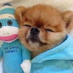 Funny Animal Pictures - View our collection of cute and funny pet videos and pics. New funny animal pictures and videos submitted daily. Cute Baby Animals, Animals And Pets, Funny Animals, Cute Puppies, Cute Dogs, Dogs And Puppies, Doggies, Jiff Pom, Buzzfeed Animals
