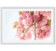 """Pink Blossoms in Jardin des Plantes Framed Print by Rebecca Plotnick, 42 x 28"""", Ridged Distressed Frame, White, Mat"""