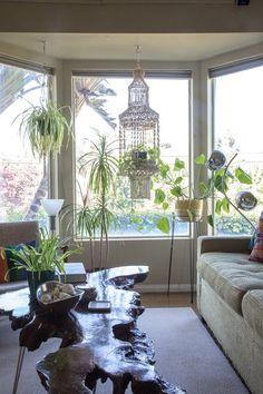 Spider plants were perfect for the macramé plant hangers that were everywhere in the 1970s, and with the resurgence of macramé and the indoor jungle, spider plants are making a comeback, too