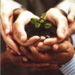 l'orto in vaso: 10 dritte per coltivare ortaggi ovunque