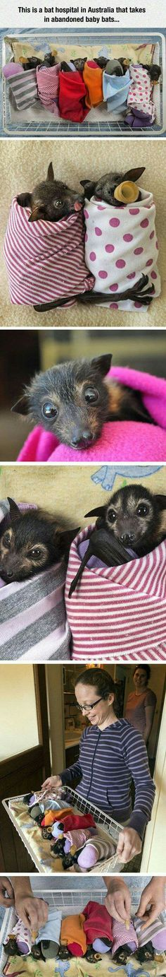 Baby bats are adorable. Cute Baby Animals, Animals And Pets, Funny Animals, Baby Bats, Cute Bat, Tier Fotos, Cute Creatures, Fauna, Animals Beautiful