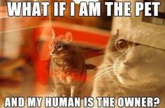 What if I am the pet and my human is the owner?  #quote #quotes #cite #citation #citations #wisequotes #word #words #wisewords #saying #poems #cat #kitten