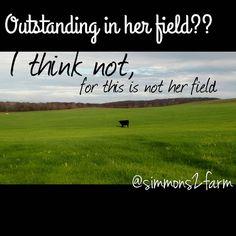 """Fence jumper! #wheatfield #fencejumper #whereisprincefarming #help #milkcow #sprinter #runslikethewindblows #outsmartthefarmher #farmherfun…"""