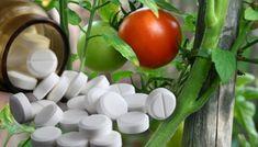 Rustic, Vegetables, Garden, House, Home, Agriculture, Plant, Country Primitive, Garten