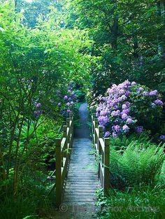 Puente en el jardin
