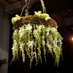 Orchid chandelier