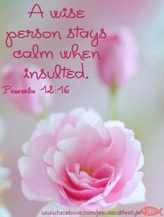 """""""A fool is quick-tempered, but a wise person stays calm when insulted."""" (Proverbs Today's Prayer 🙏🏼 God thankYou! Today and everyday, guide us to imitate Christ and always practice wisdom—be a people at ease and of a calm demeanor-in Jesus' Name Amen! Bible Verses Quotes, Bible Scriptures, Godly Quotes, Encouragement Quotes, Faith Quotes, Proverbs 12, Psalm 12, Favorite Bible Verses, Lord And Savior"""