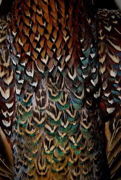 peacock colours - Google Search