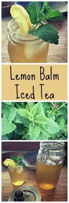 How to make a wonderful iced green tea with Lemon Balm~ Plus tips for growing and foraging for lemon balm!