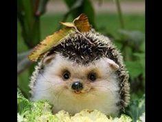 Cute Animals - süße Tiere - YouTube