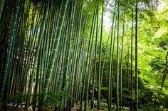 https://flic.kr/p/y3ru3i | filtered (Enko-ji temple, Kyoto) | 1/60s f/5.0 ISO320