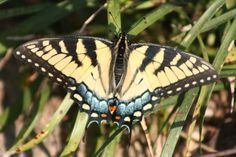 Butterfly (c) GP