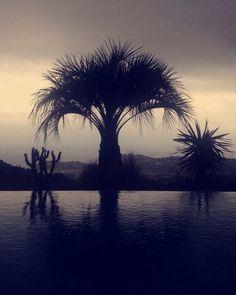 Photo.V.E/Photographie/Palmier/Black&Withe