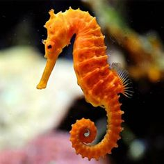 Image result for sea horse
