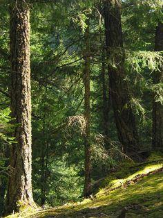 Lesů v Evropě přibývá