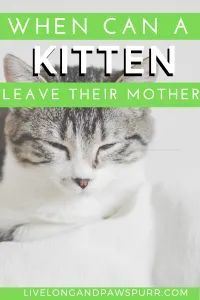 When Can A Kitten Leave Their Mother In 2020 Cat Advice Cat Questions Kitten