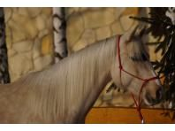 Wyszukiwarka - Jeździecki portal ogłoszeniowy - Oferty koni - Ogłoszenia sprzedam, kupię konia - Konie na sprzedaż - Stadniny i stada - Ośrodki jeździeckie i pensjonaty - Pojazdy konne - Giełda rolna - Sprzedaż koni