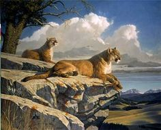 National Wildlife Galleries: The Wildlife Art of Nancy Glazier Wildlife Paintings, Wildlife Art, Animal Paintings, Animal Drawings, Horse Drawings, Big Cats Art, Cat Art, Animal Painter, Lion Art
