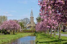 Foto 121 #Nederhorst den Berg, #Wijdemeren, #iederedagfoto gemeente gaat deze bomen #kappen